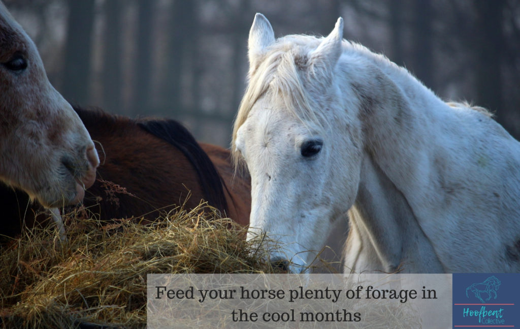 Feed you horse plenty of forage in the cool months