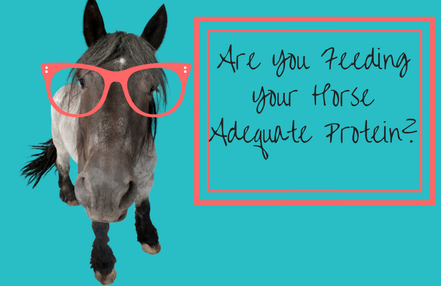 Feeding Your Horse Adequate Protein