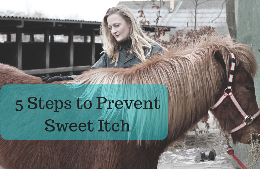 5 Steps to Prevent Sweet Itch