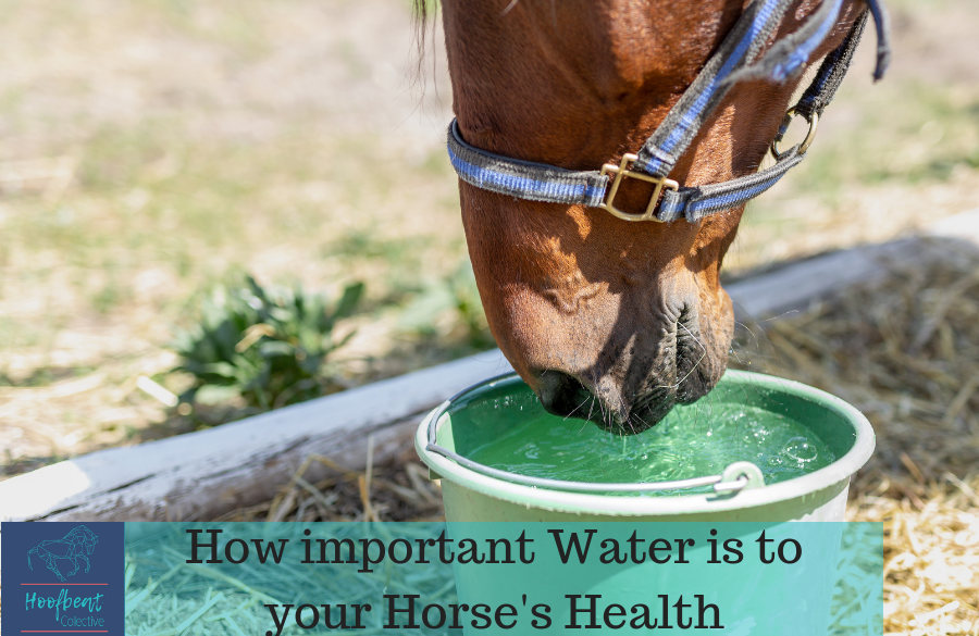 How Important Water is to Your Horse's Health