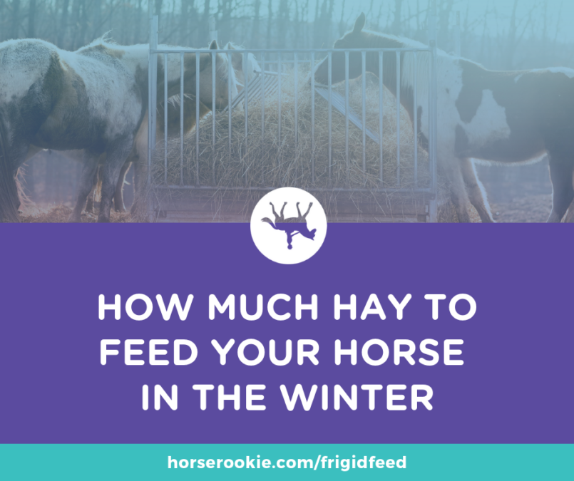 Feeding your horse hay in the winter discover how much is enough and why