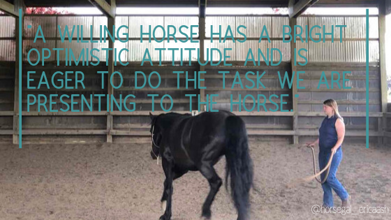 communicating with your horse and learning how to listen to what they are saying